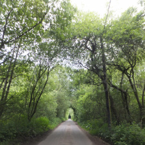 views of minor road to the garden