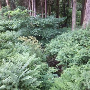 woodland area of the garden