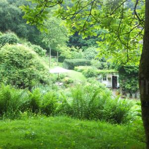 garden area around the house