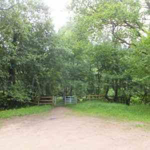 forestry picnic site on route to the garden